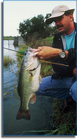 Largemouth bass caught fly-fishing the St. Johns River.
